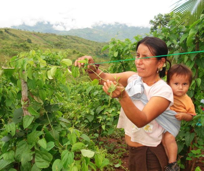 Sacha-Inchik-Sozialprojekt Peru