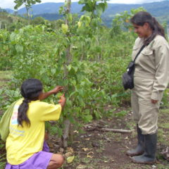 Sacha Inchik Projet Sociale