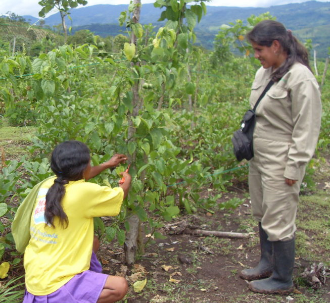 Sacha Inchik Sozialprojekt Peru
