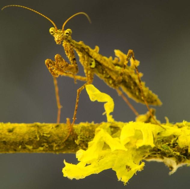 Klima im Regenwald gut für die Insekten