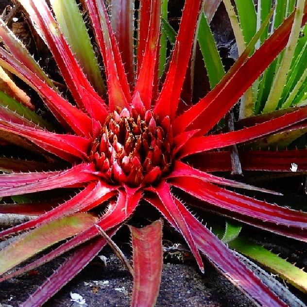Regenwald Ökosystem Pflanze
