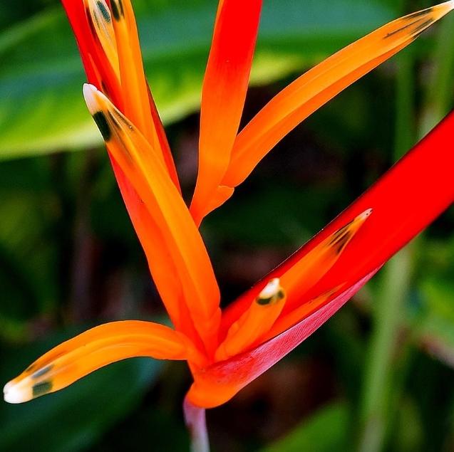 Regenwald Amazonas Vielfalt Blume